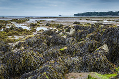 Across Bembridge Harbour - Isle of Wight (Rob Jennings2) Tags: seaweed rocks isleofwight iow bembridge bembridgeharbour bembridgelifeboatstation
