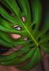 Costilla (Malia León ) Tags: green eye ojo verde left planta costilladeadan malialeon self portrait natural canon 5dmarkiii