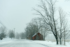 The Weather Outside is Frightful (gabi-h) Tags: snowyroad winter snowfalling gabih trees red barns powerpoles hydropoles powerlines road architecture rural rustic farm princeedwardcounty ontario goodoldwintertime december oldfashionedwinter snowflurries