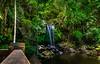 Curtis Falls, Tamborine National Park, Queensland, Australia (andrew.walker28) Tags: curtis falls rainforest palms cedar creek stream water rocks tamborine national park queensland australia