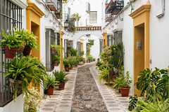 Cordoba (Andalucia, Spain): street (clodio61) Tags: andalucia cordoba europe juderia spain alley arch architecture building city cityscape color day exterior flower house lamp narrow old outdoor photography plant pot potted street typical urban white window