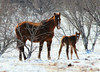 My Favorite Things (It Feels Like Rain) Tags: myfavoritethings horse horses maresandfoals filly mare mares foal foals snowy snow west texas ranch ranching ranches westtexasranches winter winter2016 happyholidays merrychristmaseve christmaseve cheval caballo equine americanquarterhorseassociation aqha