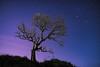 Lo de Valdes (neritron) Tags: tree trees silhouette siloet silueta arbol night noche sky cielo heaven stars long exposure green verde light painting nikon d750 rokinon 24mm f14 landscape landscapes nightscape paisaje paisajes
