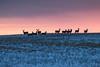 Bottom Of The Year (gerrypocha) Tags: deer winter december buck doe sky