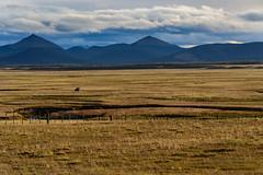 Real Malevo. (Fueguino01) Tags: malevo gaucho patagonia horse alone solo desierto montañas yehuin caballo marron