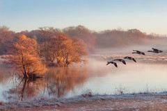 Return Home (Ida H) Tags: nature landscape birds geese geeseinflight lake pond park outdoors morning winter goldenhour peaceful calm orange lateautumn autumn cold blueandorange complementarycolours colourful serene serenity water mist misty icy frosty frost reflections throughherlens