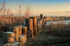 no water breakwater (Christian Collins) Tags: bay city baycitystatepark michigan sunrise breakwater lakehuron beach weeds clouds pink sky snow winter canoneos5dmarkiv