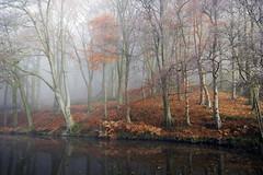 Misty Morning (Phil_Mercer) Tags: mist autumn canal orange water trees wood woodland yorkshire skipton leaves misty fog
