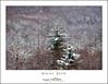 Spring Snow (DKNC) Tags: northcarolina nc blueridgeparkway winter spring snow trees red daleking