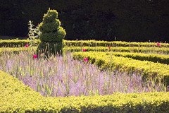 Topiary and a Tinge of Purple (Dave Roberts3) Tags: wales garden cardiff sunny hedge glamorgan paths coth citrit coth5 friarygarden