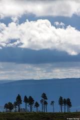 Zion High Country (isaac.borrego) Tags: trees silhouette mountains westrimtrail zion nationalpark utah canonrebelt4i unitedstates america usa