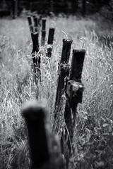 Kreuze- Helios Bokeh (trommler13) Tags: friedhof grave graveyard dark fuji creepy grab sanatorium flandern gräber helios444 xpro1
