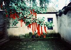 Zhujiajiao (Roon & Beks) Tags: china film 35mm lomo lca cross process