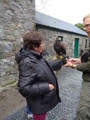 Falconary Ireland014