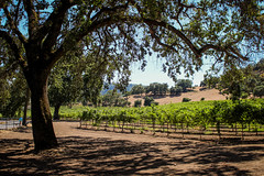 Another Yountville Vineyard (DuggieH) Tags: california vineyard winery grapes napavalley yountville