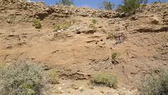 IMGP1843.jpg (DrPKHouse) Tags: arizona unitedstates loco bullheadcity bullhead