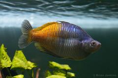 Chester Zoo (Bri_J) Tags: uk fish zoo aquarium nikon cheshire chester chesterzoo d3200