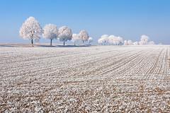 IMG_7271 (karsten.bretschneider) Tags: winter germany bavaria trees raureif deutschland bayern cold kalt