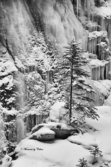 Waiting on Spring (Canon Queen Rocks (1,130,000 + views)) Tags: snow frozen freeze icicles tree winter white nature nationalpark johnstoncanyon water banffnationalpark bw black monochrome blackandwhite outdoor