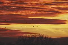watching winter*fire burning in the sky (***étoile filante***) Tags: sky himmel clouds wolken light licht sunset sonnenuntergang nature natur birds vögel emotions soulful poetic poetisch magic magie magisch evening abend winter