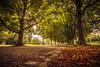 Spaziergang am Seepark in Freiburg (simonpe86) Tags: bäume path spazieren freiburg seepark lake weg bänke walk