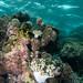 Lissenung Island, Bismarck Sea, Papua New Guinea.