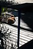 Cat (MelindaChan ^..^) Tags: guangzhou china cat light shade shadow lines pattern chanmelmel mel melinda melindachan festival guangzhoulightfestival 廣州 紅專廠 redtory