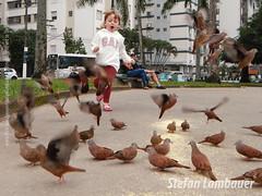 Catharina (Stefan Lambauer) Tags: catharina baby birds pombinhas pombas doves menina infant kid criança stefanlambauer santos brasil brazil 2016 sãopaulo br