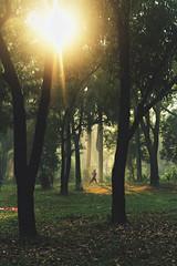 Morning walk (ainulislam) Tags: walk morning jog jogging light tree woods run running flare sun women spotlight