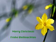 Frohe Weihnachten (dolorix) Tags: froheweihnachten merrychristmas joyeuxnoel prettigekerstdagen buonnatale feliznavidad