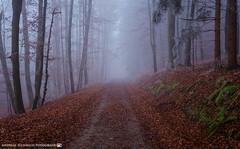 A walk in the fog-shrouded forest. (andreasheinrich) Tags: forest path trees fog afternoon winter december foggy cold germany badenwürttemberg neckarsulm dahenfeld deutschland wald weg bäume nebel nachmittag dezember neblig kalt nikond7000