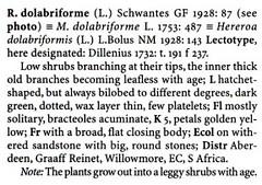 Rhombophyllum dolabriforme