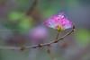 0W6A8742 (Liaqat Ali Vance) Tags: nature flower google liaqat ali vance photography lahore punjab pakistan
