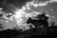 In Nature, Oaxaca (Geraint Rowland Photography) Tags: dog shadows light sunlight sunshine sunflare lensflare perro animal animalportrait mexico nature blackandwhitephotography doggy oaxaca oaxacacity travelphotography geraintrowlandphotography