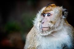 monkeys-1026