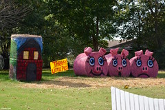 """""""ThrHAY Little Pigs"""" (Jake (Studio 9265)) Tags: hay bale art creative display artwork country rural usa united states america todd county ky kentucky fall 2016 three little pigs pink"""