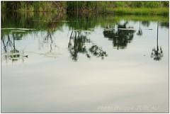 DSC08690PJ_XNV (http://phj.bookfoto.com/) Tags: botswana afrique okavango philippe jubeau delta