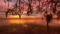 Spanish Moss Awaiting the Sunrise (JDS Fine Art & Fashion Photography) Tags: nature landscape beach ocean trees sunrise spanishmoss inspirational serene beauty naturesbeauty