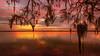 Spanish Moss Awaiting the Sunrise (JDS Fine Art & Fashion Photography) Tags: nature landscape beach ocean trees sunrise spanishmoss inspirational serene beauty naturesbeauty