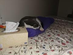 Neurmal Napping