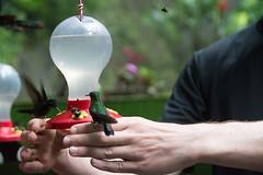 Hummingbird hand rest