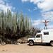 E, encontramos um cactus gigante