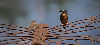 Kingfisher & Reed Warbler