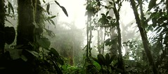 Los Cedros Cloud Forest (sphaisell) Tags: ecuador fb cloudforest loscedros
