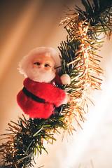 Christmas (Irene P. Photography) Tags: christmas christmastree decoration decor christmasdecor navidad merrychristmas merryxmas xmas christmasstar espiritunavideño nadal bonnadal feliznavidad papanoel hohoho