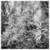 winter's icy grip (karma (Karen)) Tags: baltimore maryland home backyard trees branches icestorm texture htt htmt monochrome bw squared 4winter