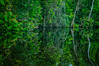 Navigable Waterway of Lagoon Ologá III... (José Pestana) Tags: america americadelsur americaamérica amerika américa américadelsur américas amérika amérique botanic dabeecadda eðli fotografía fotografíadigital green indalo iseda josépestana jungle laguna lagunadeologá mar natura naturaleza nature océano océanoatlántico ologá paisaje paises photography sony sonynex sonynex6 southamerica sudamérica suramerica suramérica tabiat toetra venecuela venetiola venetsueela venezoela venezuela venezwela venezyela verde wenezuela zulia βενεζουέλα амерыка природа судамерица վենեսուելան أمريكا भेनेजुएला আমেরিকা ਵੈਨੇਜ਼ੁਏਲਾ වෙනිසියුලාව အမေရိကတိုက် ვენესუელა ベネズエラ 印第安委員會 委內瑞拉 베네수엘라