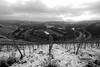 Saar Winter 6 (Denkrahm) Tags: wiltingen kanzem saar denkrahm monochrome schleife river winter vineyards weinberge