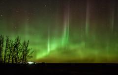 Yes, That's Green You See (Kristin Repsher) Tags: alberta aurora auroraborealis calgary canada cochrane d750 farm longexposure night nightphotography nightsky nikon northernlights