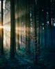 Young and Enlightened (noberson) Tags: tree trees forest light lightrays sun sunrays fog foggy woods cold warm